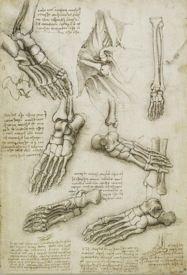 Leonardo da Vinci - Dibujos de anatomía humana: Los huesos del pie y ...