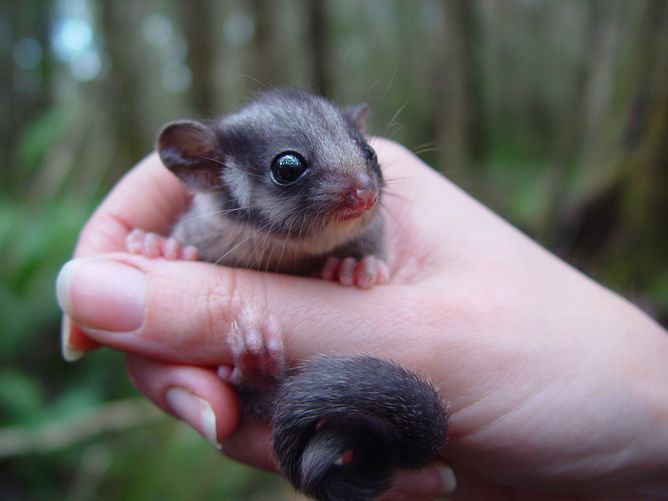 Victorian Law Change Abandons Native Forests To Loggers Australia Animals