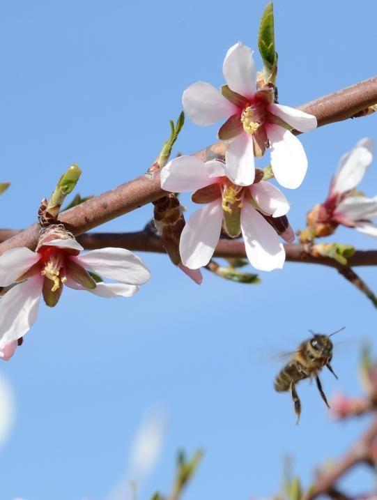 La primavera que está por llegar