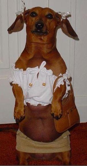 I wish my Doxie was a female!