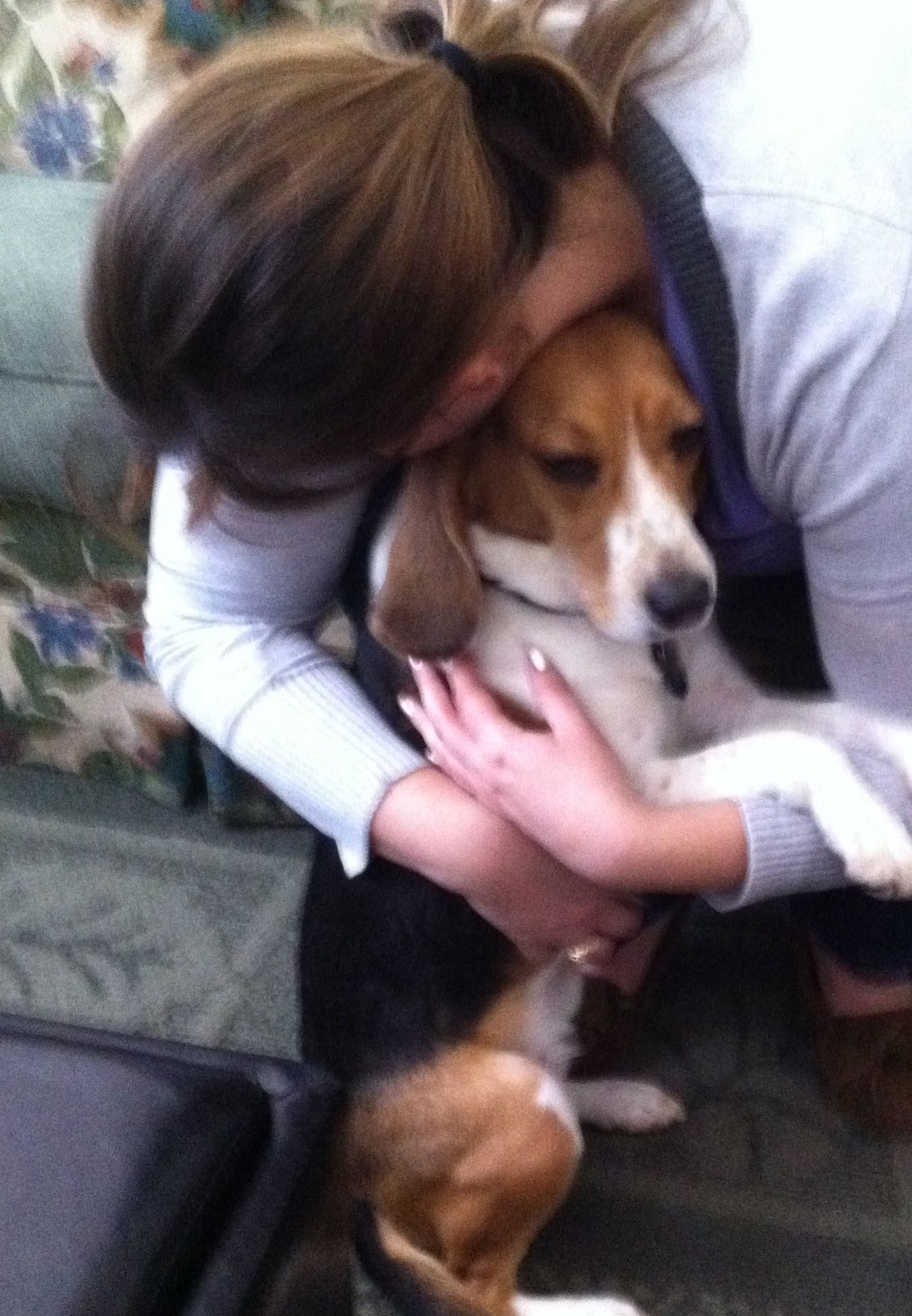 Phoebe The Wonder Beagle Cute Beagles Baby Beagle Dogs