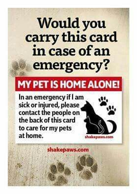 My Pet Is Home Alone I N An Emergency If I M Sick Or Injured Please Contact The People On The Back Of This Card To Care For My Pets At Home Pets