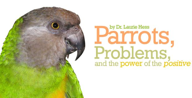 Parrots Problems And The Power Of The Positive Parrot Parrot Pet Best Pet Birds