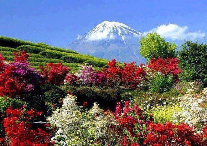 Montaña y flores...