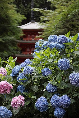 Kyoto Gansen-ji temple