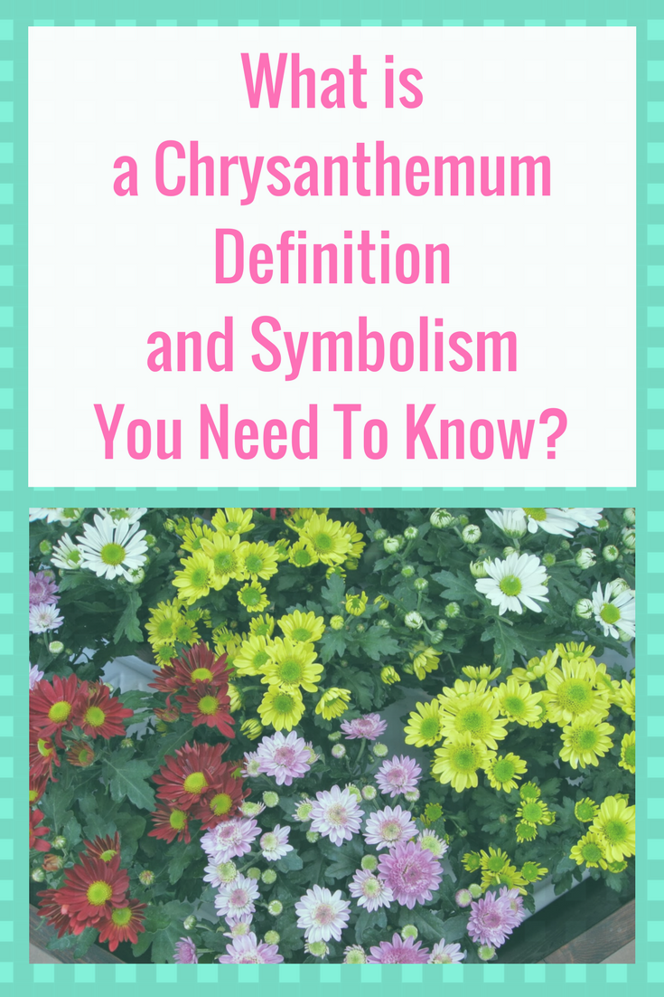 What Is A Chrysanthemum Definition And Symbolism You Need To Know Chrysanthemum Meaning Chrysanthemum Need To Know