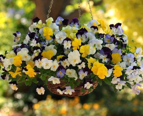 Hanging Flower Baskets : 5 Secrets the Pros Use #hangingbaskets