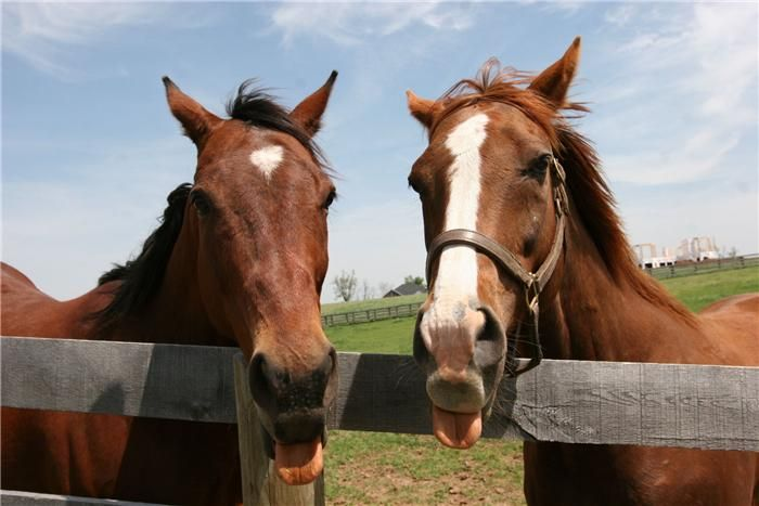 Futural And His Pal Affirmed Success At Old Friends In Lexington