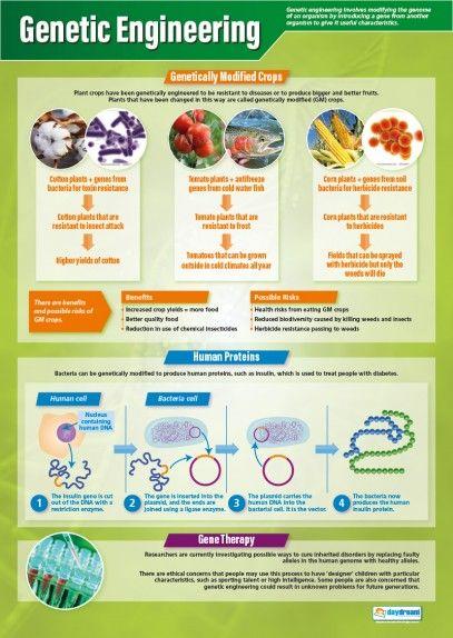 Genetic Engineering Poster | Engineering science, Genetics ...