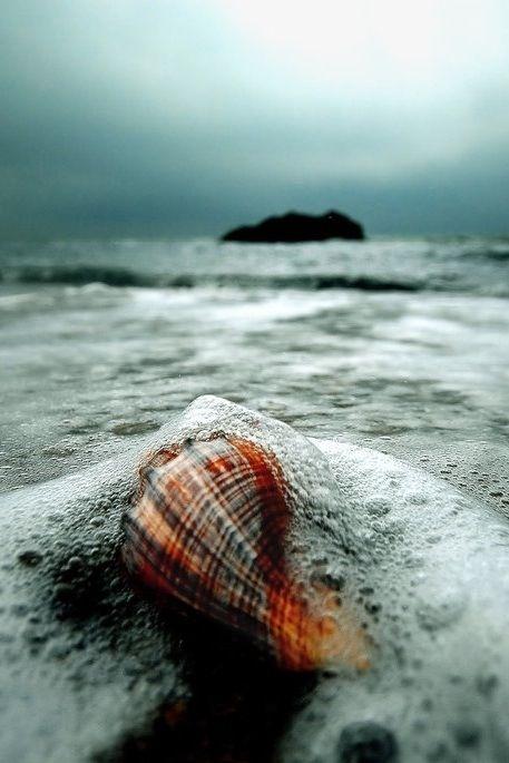 Landscape Nature Gifts Merchandise Beach Scenes Sea Shells Ocean