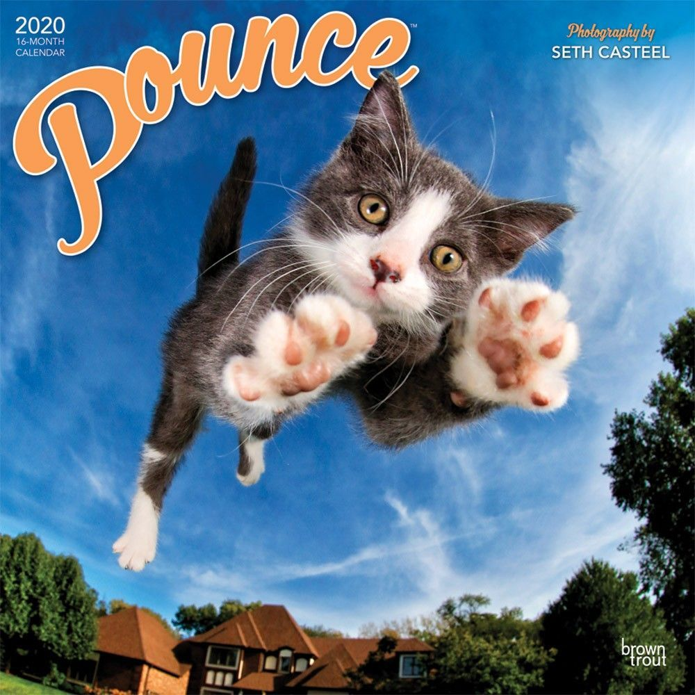 Pounce 2020 12 X 12 Inch Monthly Square Wall Calendar Kitten Humor Isbn 978 1 9754 1297 5 Kittens Funny Kitten Cuddle Wall Calendar