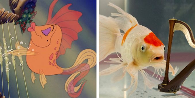 Real fish versus little mermaid fish mermaid fish and for The little mermaid fish