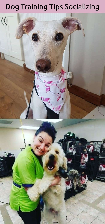 Energetic dog training cesar millan dog pictures pinterest