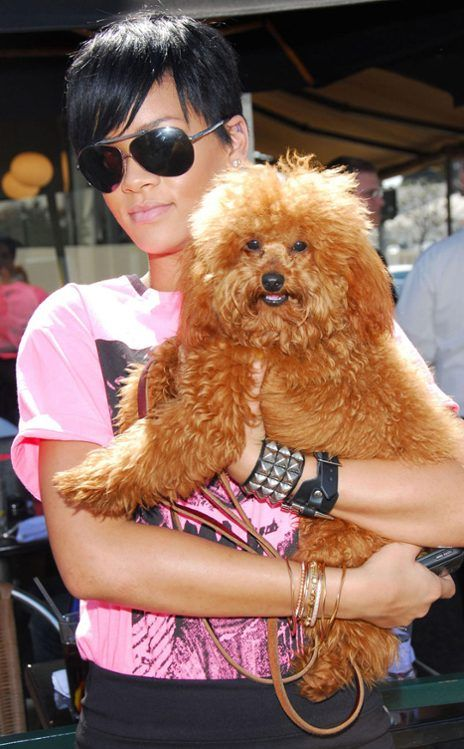 5 Rihanna S Dog Oliver From Top 10 Celebrity Pets Of 2012 Celebrity Dogs Pamper Pets Pets