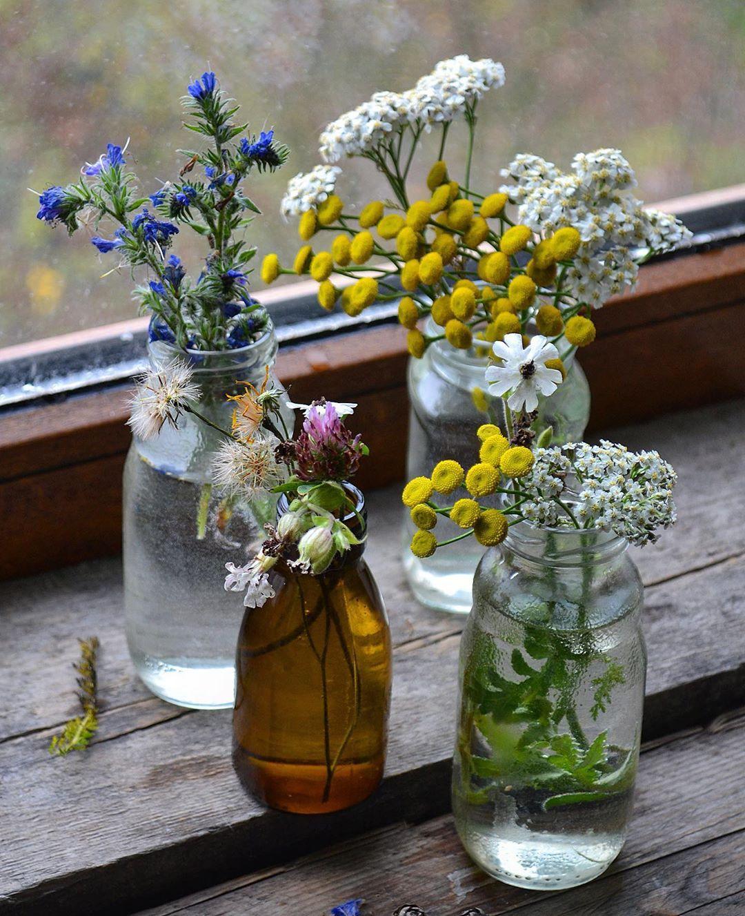 "Юлия on Instagram ""autumn november flower flowers"