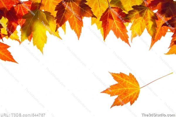 Microsoft Free Fall Clip Art Downloads Hanging Fall Maple Leaves Border Stock Photo Stock Image Clipart Clip Art Borders Fall Clip Art Leaf Border