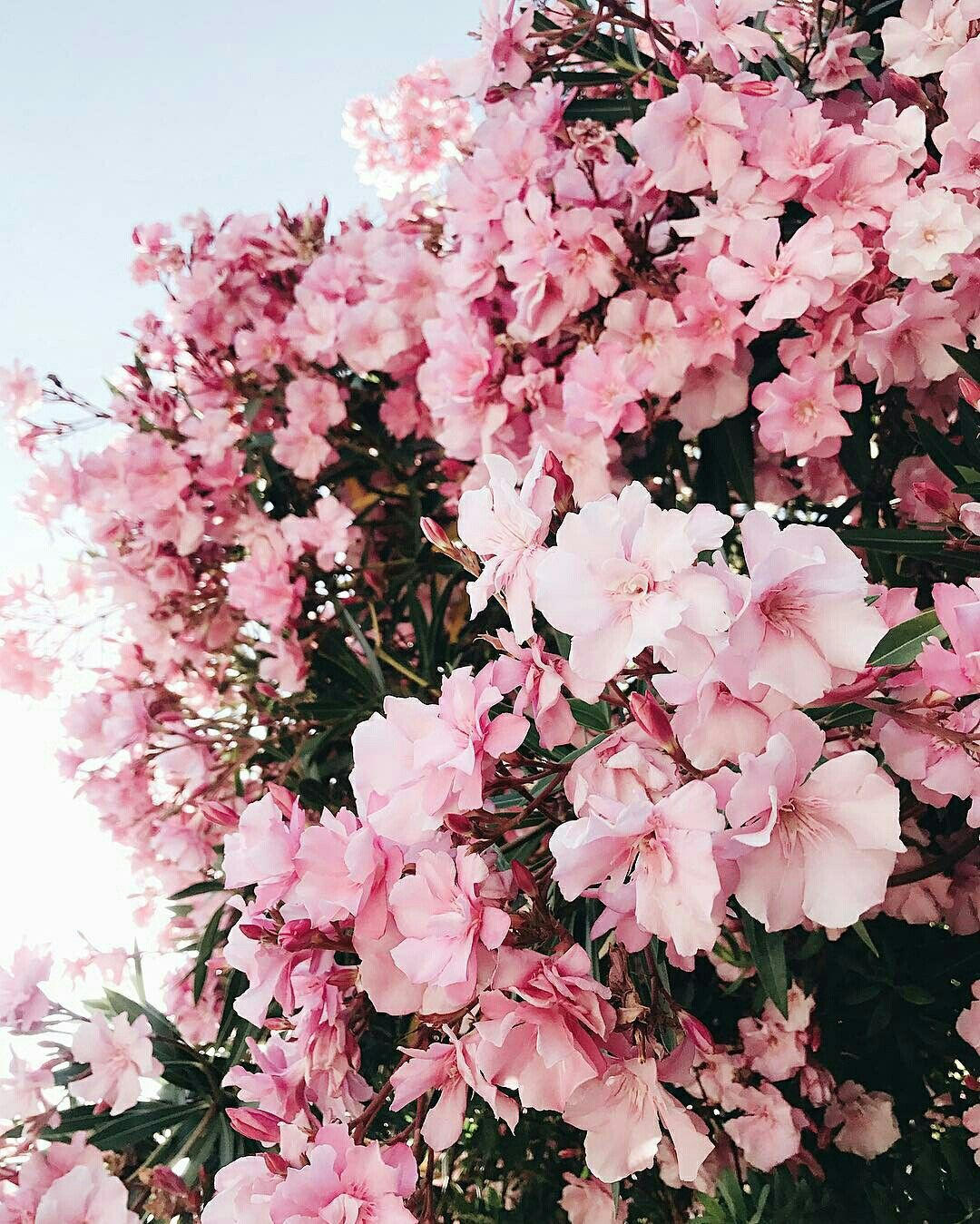 Aesthetic Pink Pictures Pinterest