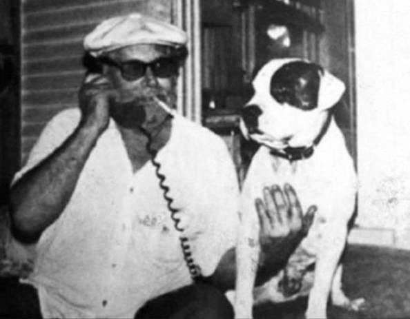 Carver and Stompanato | american pit bull terriers