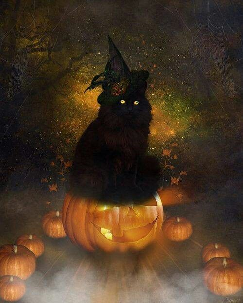 Image result for black cats and jack o'lanterns