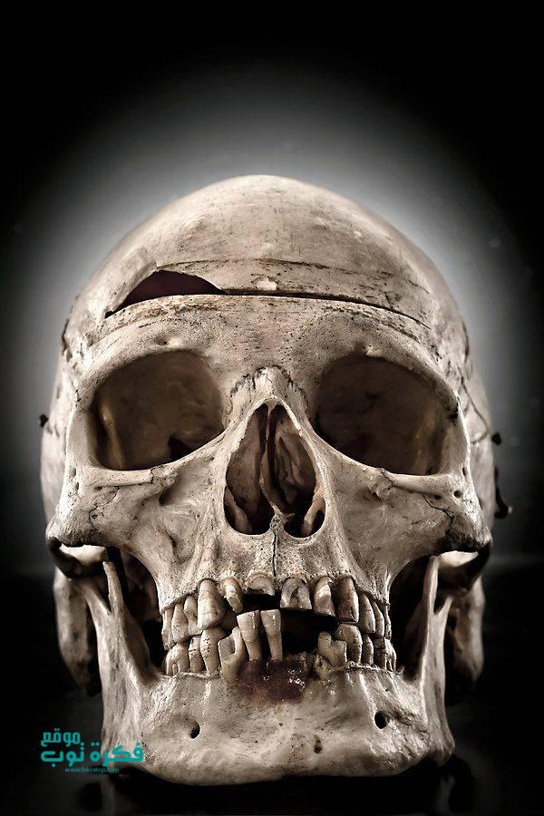 صور جماجم مرعبة جدا 2019 خلفيات جماجم نارية كيوت ملونه Hd 5 Real Skull Skull Anatomy Real Human Skull