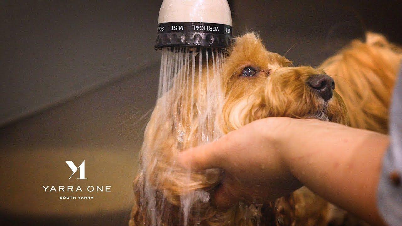 Premier Home For Pet Dog Lovers In Melbourne Australia Yarra