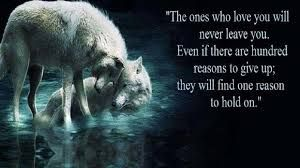 This is adorable  | Amor | Wolf quotes, Lone wolf quotes