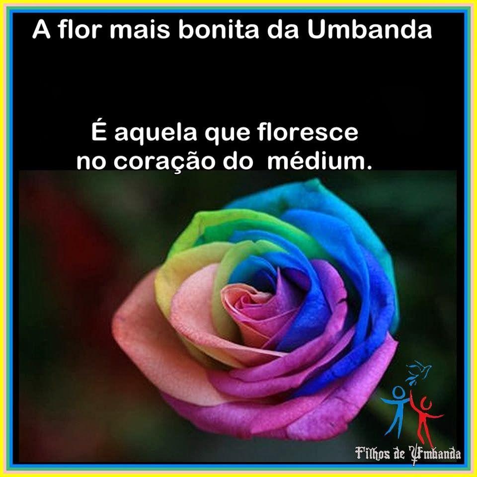 Centro de Iluminação Nosso Lar: Flor da Umbanda