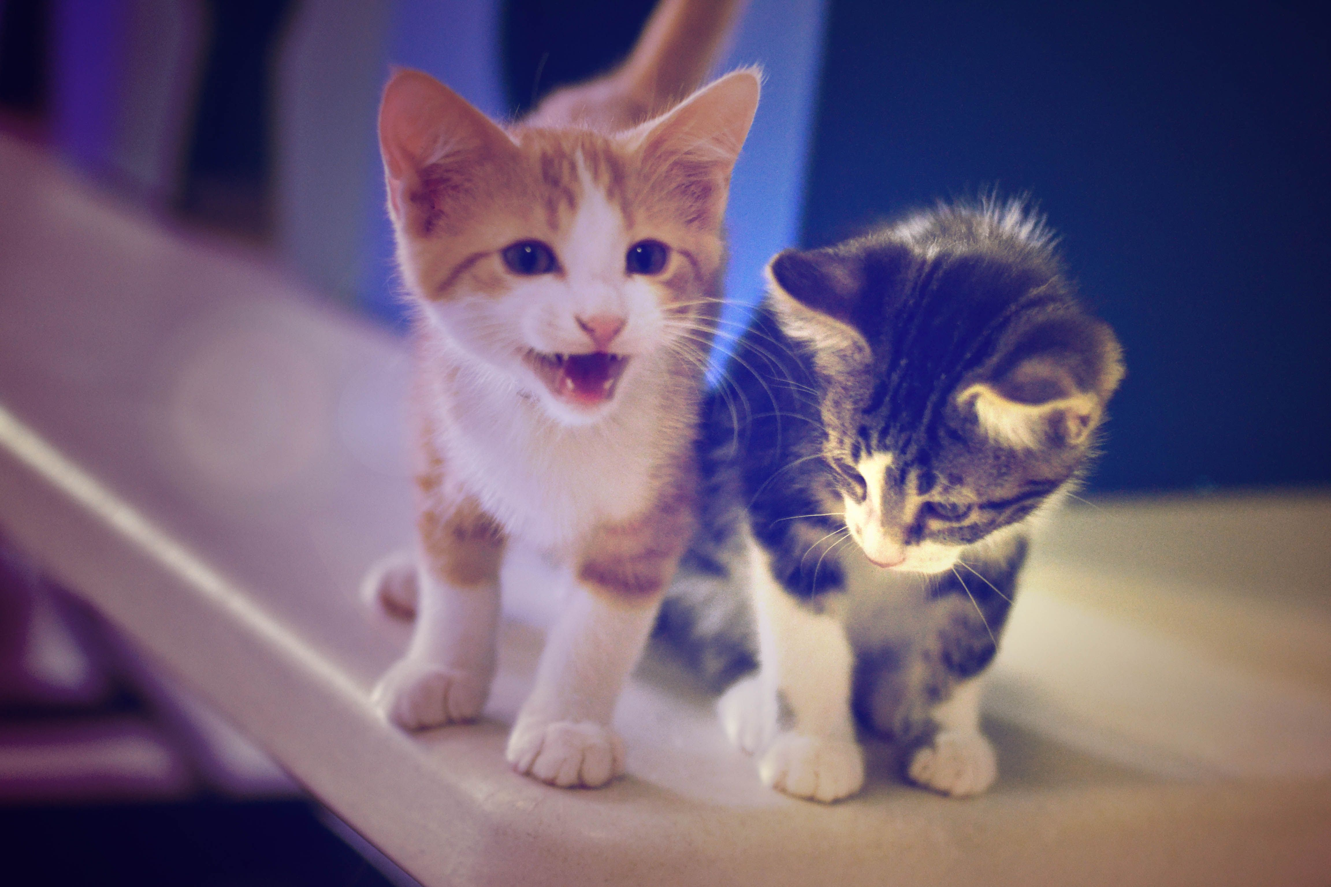 A cute litter at the Edmonton Humane Society Kittens