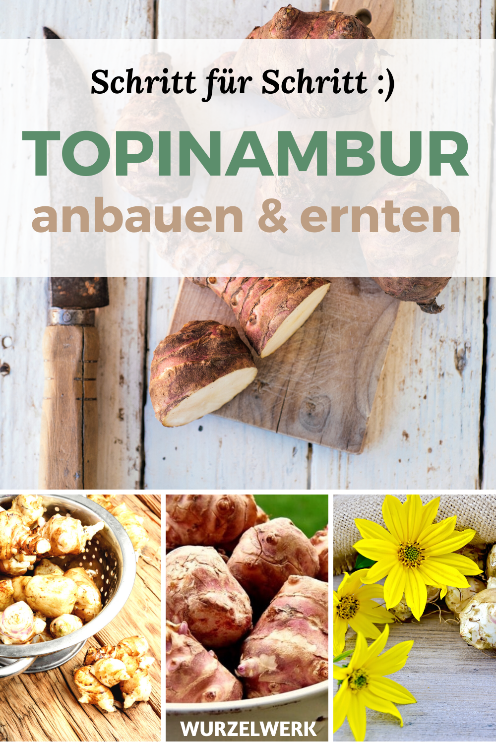 Photo of The complete Jerusalem artichoke guide: planting, growing & harvesting