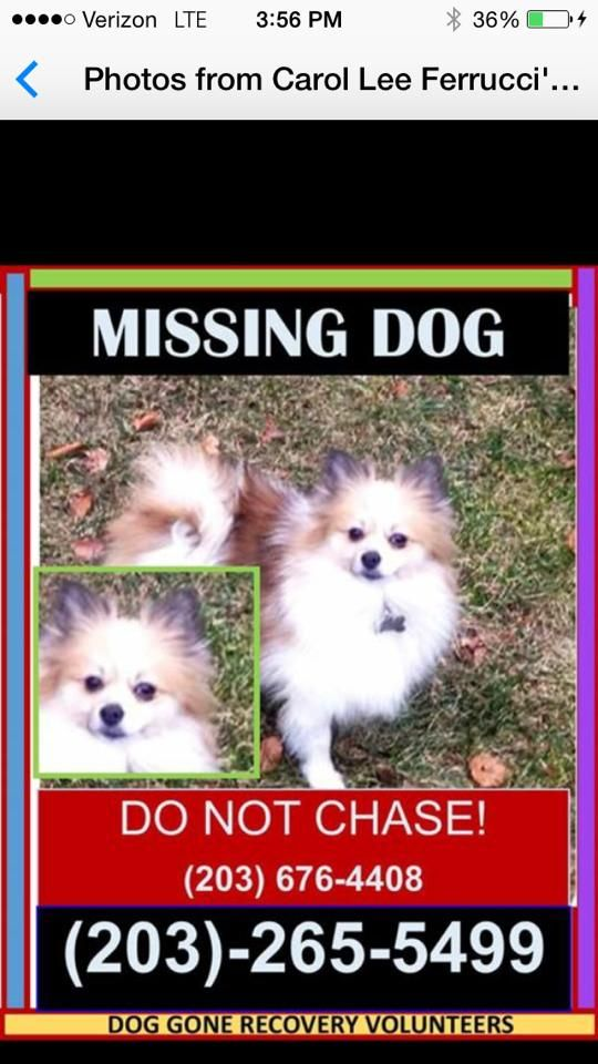 Cheshire Animal Control Yesterday · Edited ·     GOOD NEWS! Found!  Lost from Hitchcock court here in Cheshire. Dog was visiting and is unfamiliar with the area. Please call with any sightings. Sharon Boulanger