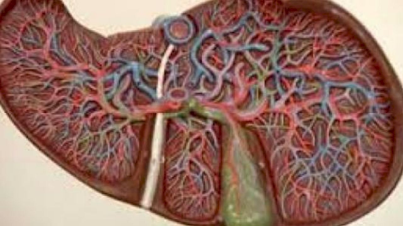 كيفية علاج فيروس سى الخامل Cirrhosis Herbs Treatment