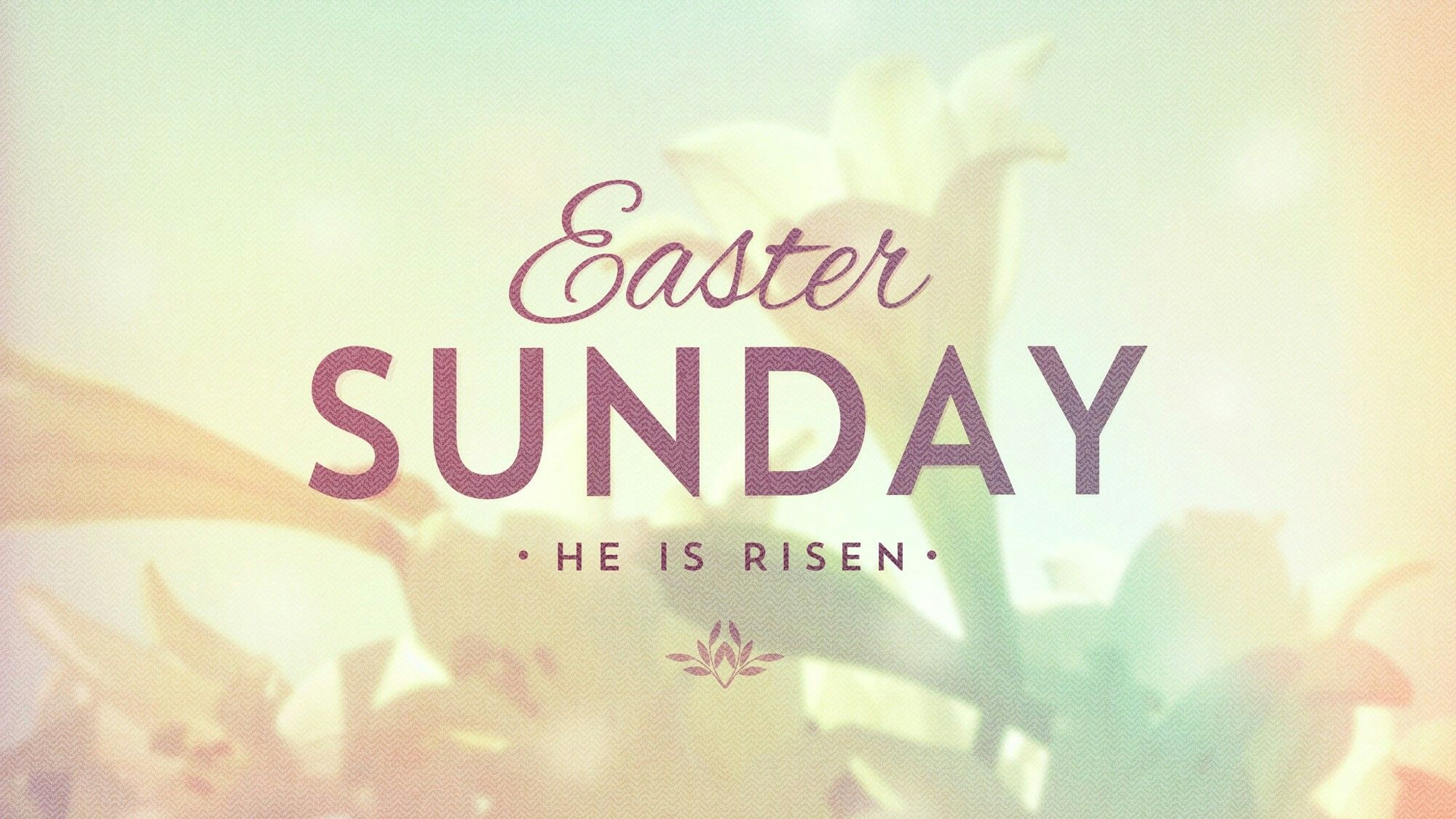 Pin by Mary Mendez on Easter Happy easter sunday, Happy