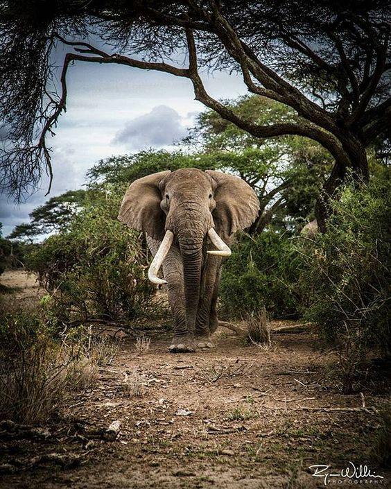 KWS (kwskenya) Twitter Majestic animals, Animals
