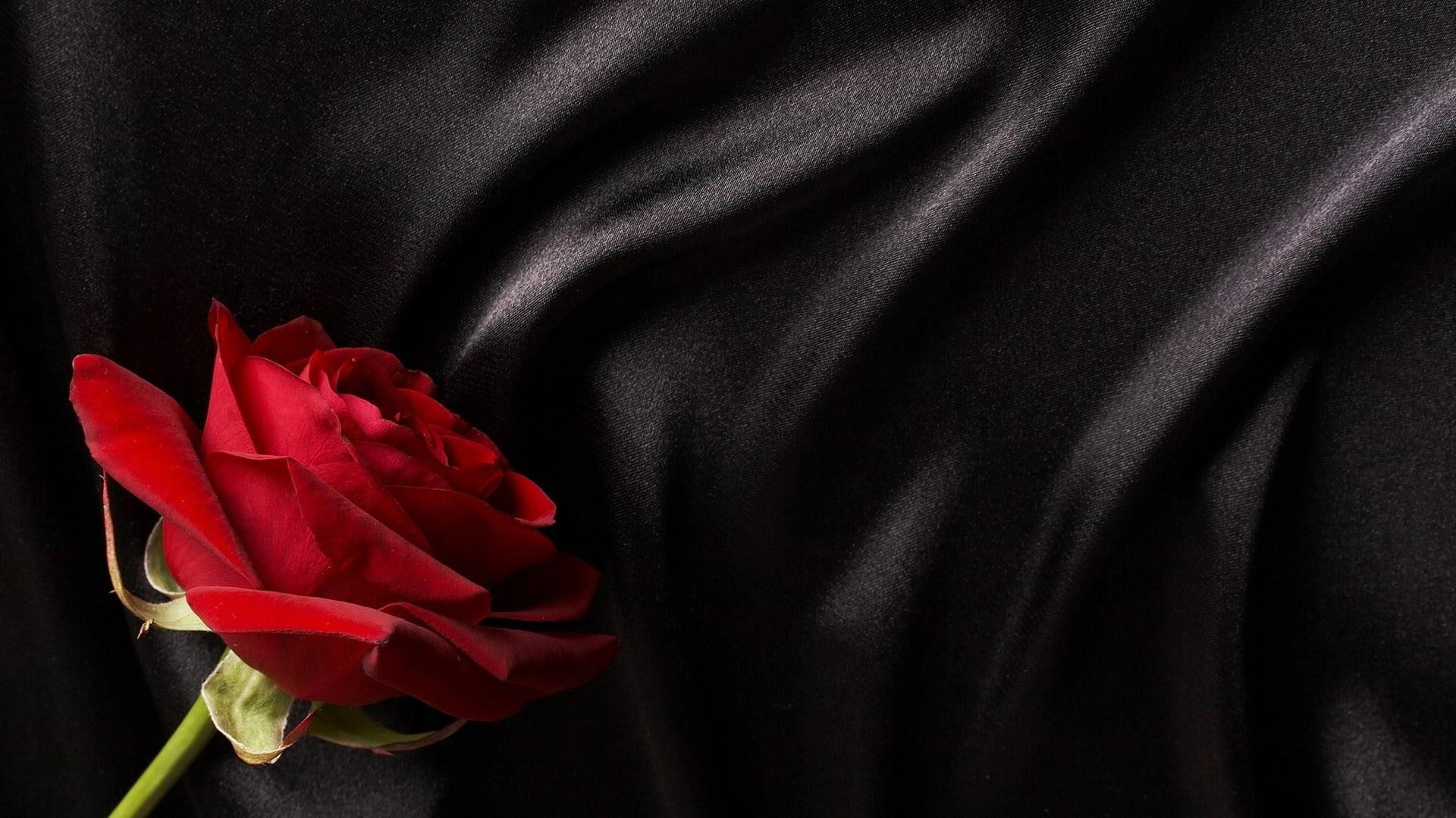 Pin By Cammi Cook On Gothic Gothic Wallpaper Rose Wallpaper Black Wallpaper