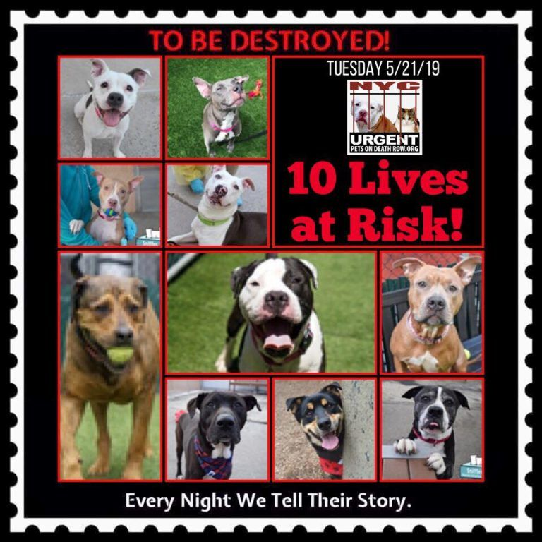 10 LIVES TO BE DESTROYED 5/21/19 NYC ACC ⚠️⚠️⚠️SO MANY