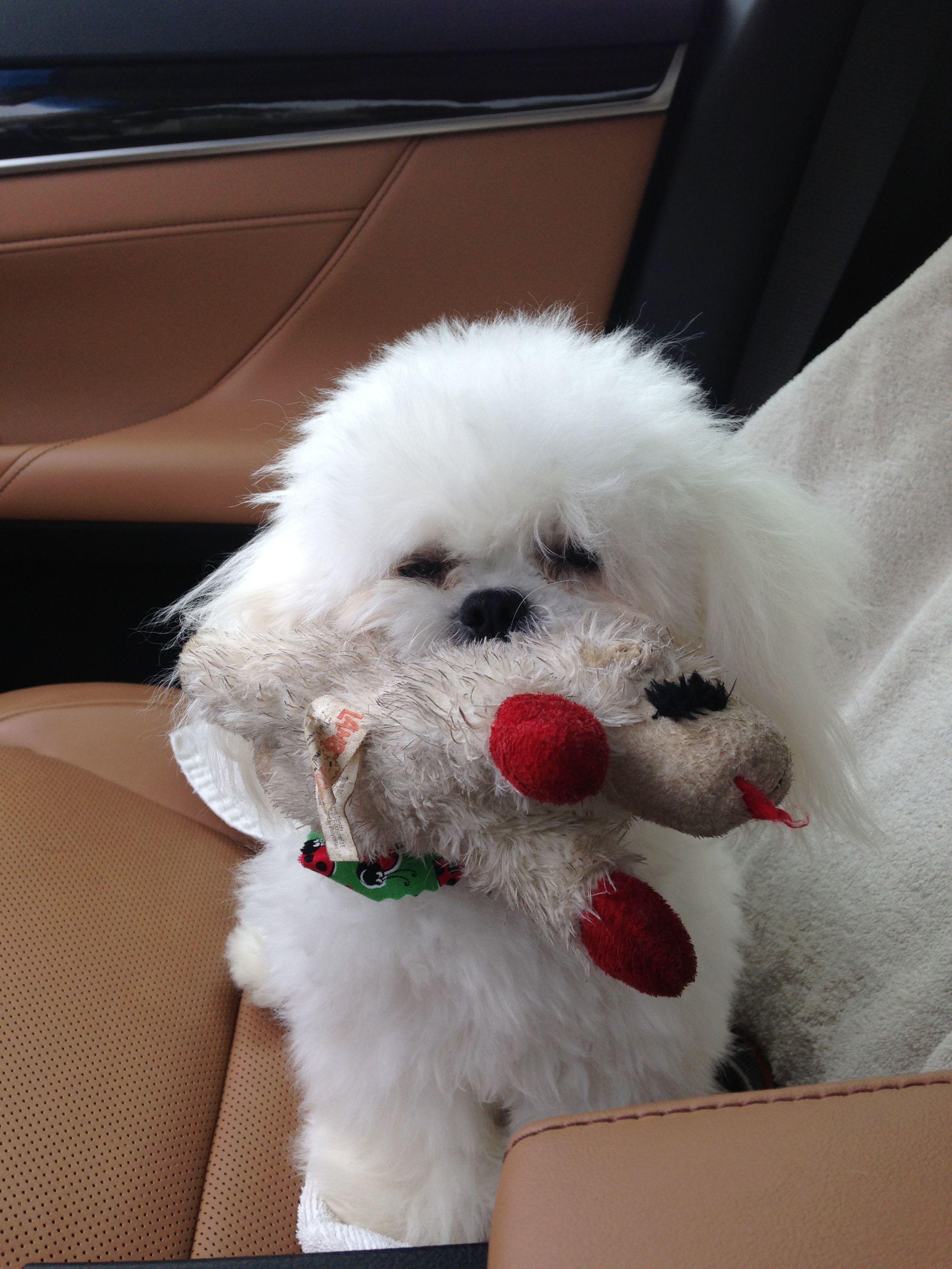 This the dog I got - my precious Ozzie