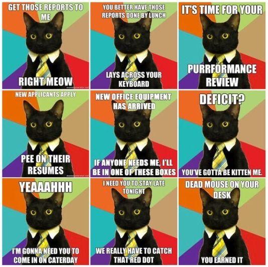 Office Humor Business Cat Humor Pinterest Office Humor Humor