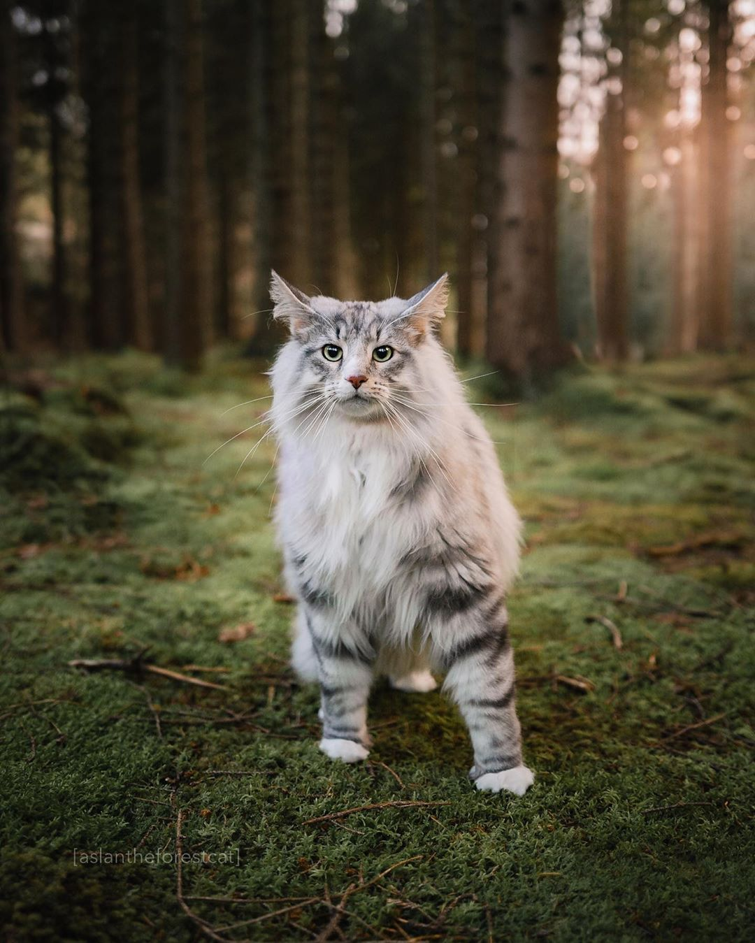 Top 10 Most Beautiful Cat Breeds In The World in 2020