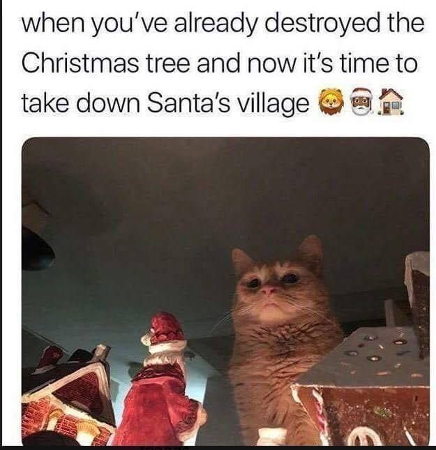 Best Funny Pins TOP 75 Funny Cats Memes TOP 75 Funny Cats Memes 11