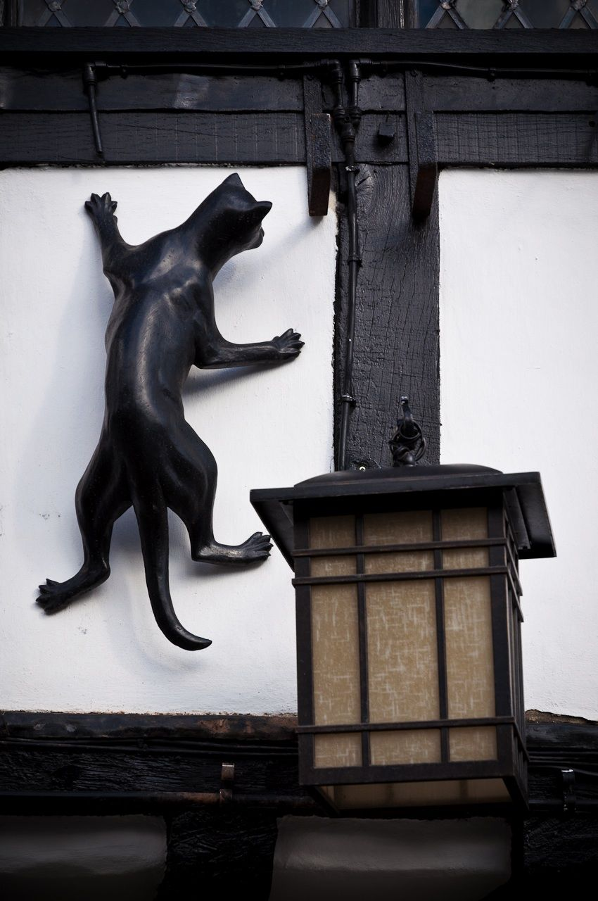 Statues of cats in different areas of York. Black Swan Pub