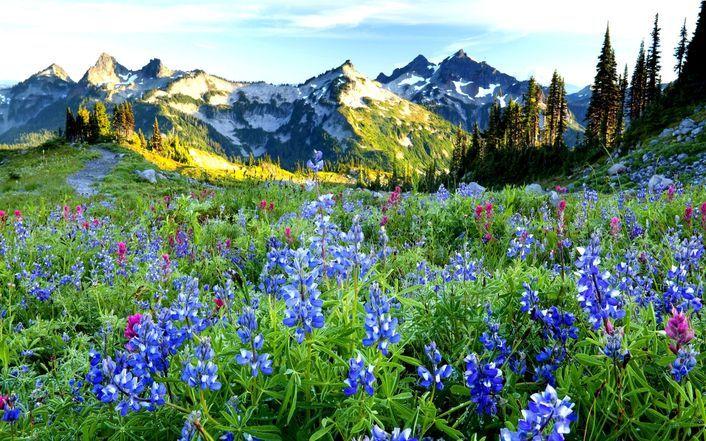 Purple mountain flowers wallpaper