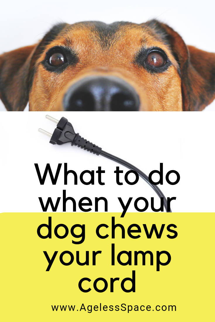 What To Do When Your Dog Chews Your Lamp Cord Dog Chews Stop Dog Chewing Your Dog