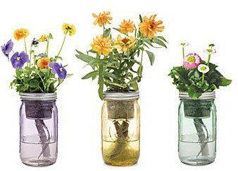 Mason Jar indoor flower garden: The reusable, vintage-inspired ... on indoor herb growing systems, indoor plant arrangements, indoor hydroponic plant systems, indoor garden lights, indoor fort kits, indoor hydroponic growing systems,