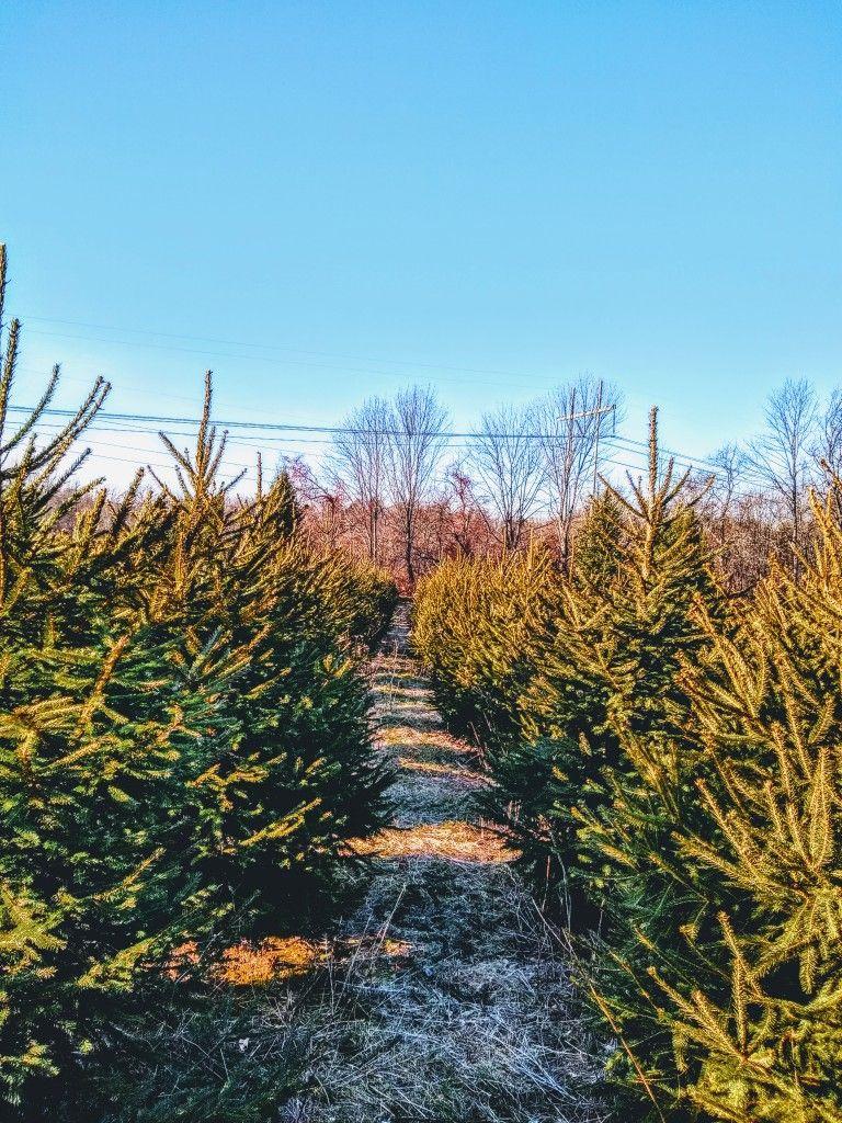 Pin By David Jay Seaton On West Newbury Ma Photography Tree Farms Christmas Tree Farm Farm