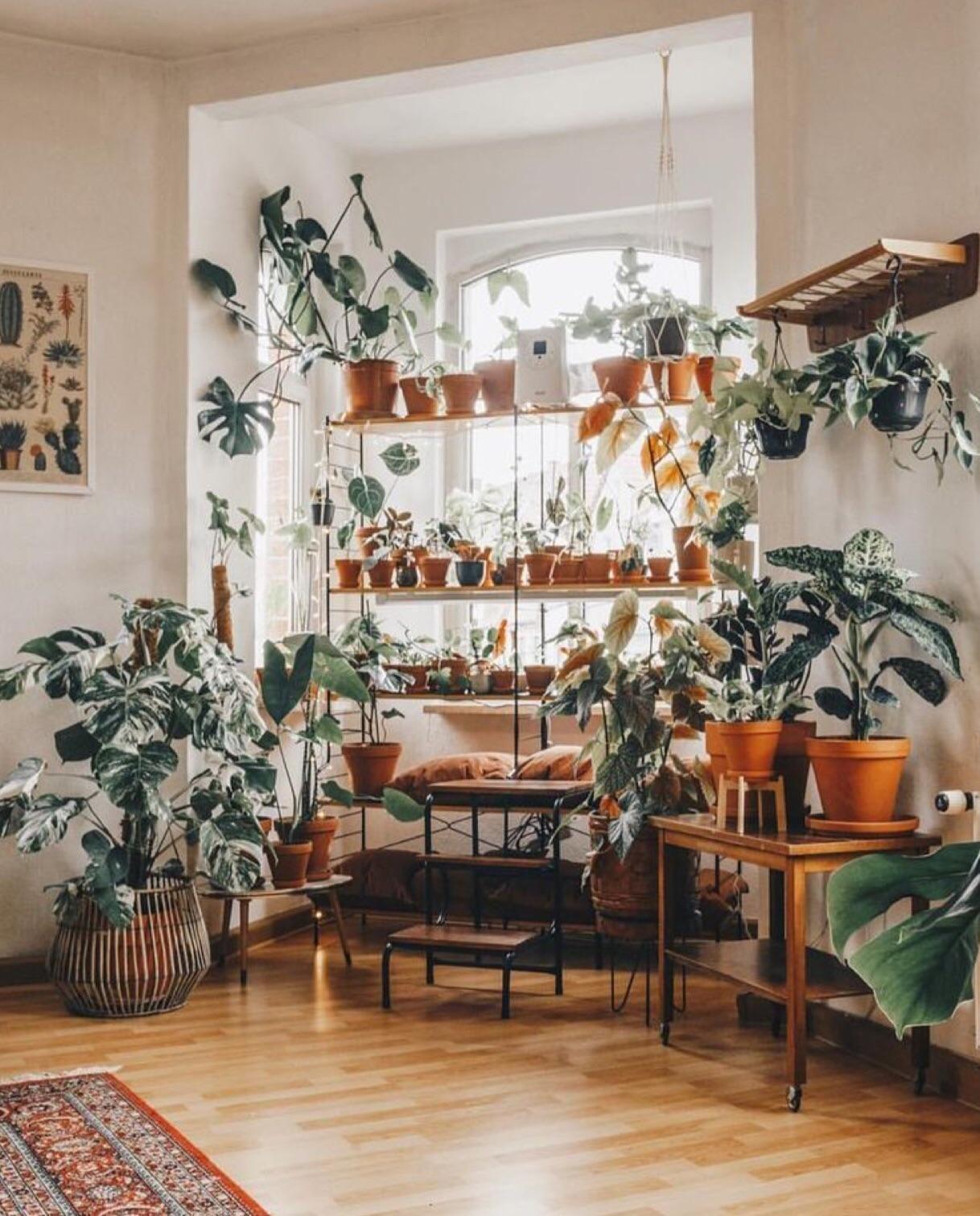Plant room. plants Trendy home decor, Plant decor
