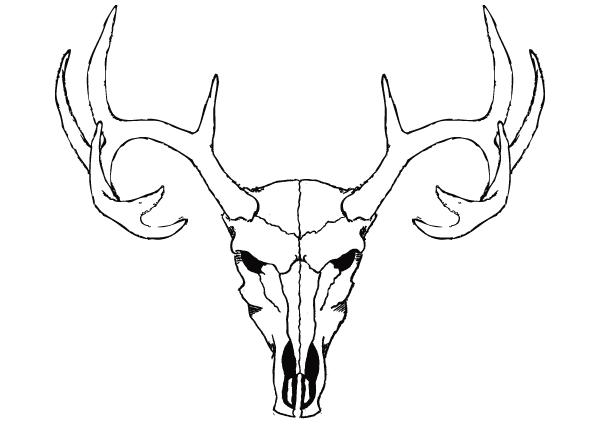 Deer Skull Vector Free Skull Art Animal Skulls Drawing Deer Skull Tattoos