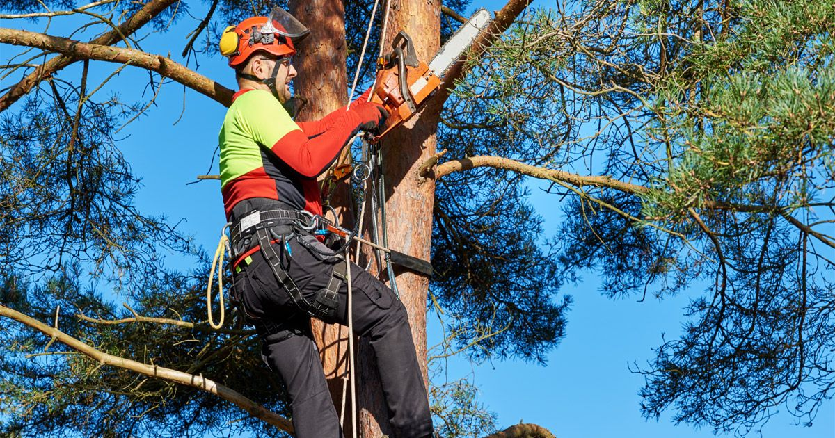 Tree care workers face numerous jobrelated hazards, many