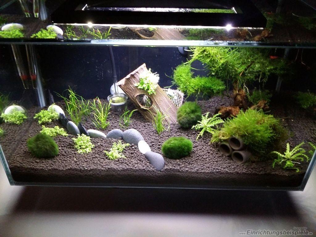 Dekorieren mit steinen alles ber wohndesign und m belideen - Holz deko aquarium ...