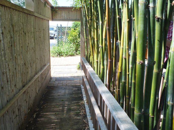 Sichtschutzzaun Aus Schnellwachsenden Pflanzen Tipps Fur Bambus Im