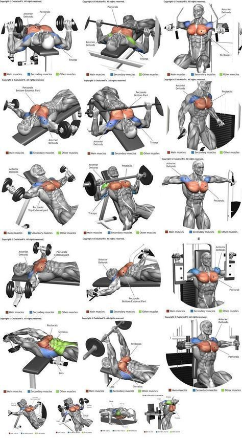 Body Building Workouts – Chest workouts